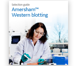 Amersham western blotting selection guide