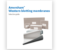 Selection guide - Amersham western blotting membrane